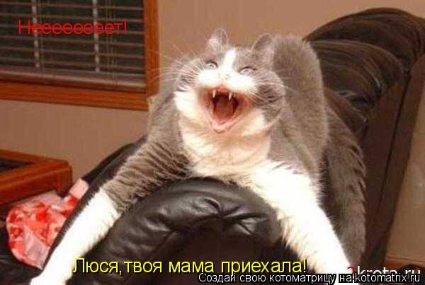 Котоматрица: Неееееееет! Люся,твоя мама приехала!