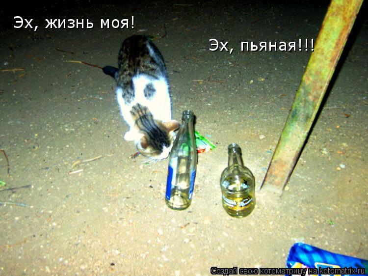 Котоматрица: Эх, жизнь моя! Эх, пьяная!!!