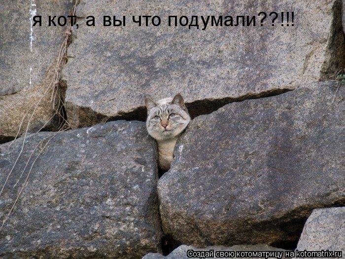 Котоматрица: я кот, а вы что подумали??!!!