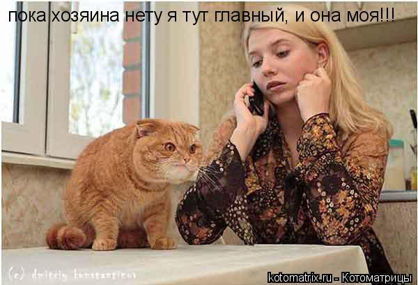 Котоматрица: пока хозяина нету я тут главный, и она моя!!!