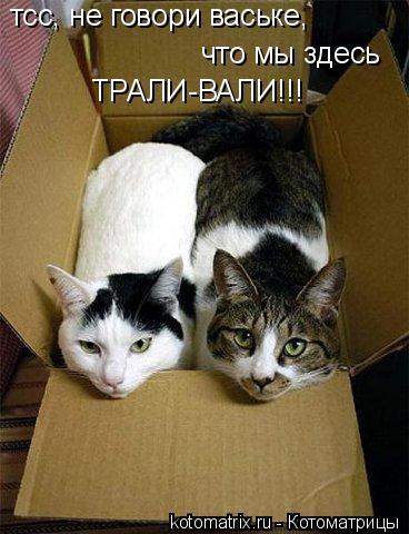 Котоматрица: тсс, не говори ваське,  что мы здесь ТРАЛИ-ВАЛИ!!!