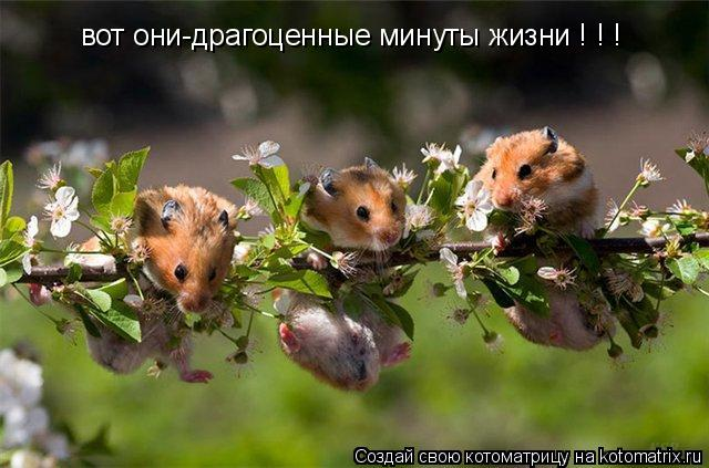 Котоматрица: вот они-драгоценные минуты жизни ! ! !