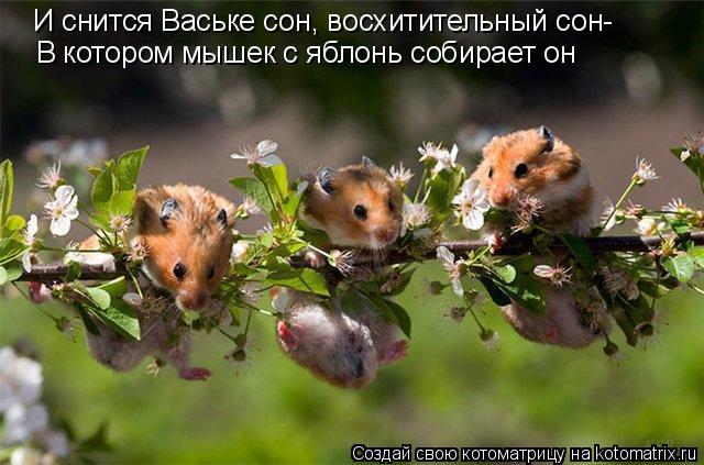 Котоматрица: В котором мышек с яблонь собирает он И снится Ваське сон, восхитительный сон-