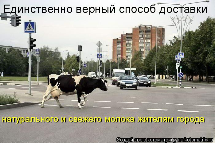 Котоматрица: Единственно верный способ доставки натурального и свежего молока жителям города