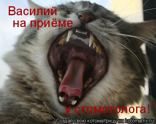 Котоматрица: Василий на приёме у стомотолога!