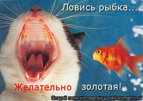 Котоматрица: Ловись рыбка... Желательно золотая!
