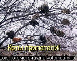 Котоматрица: Коты прилетели!