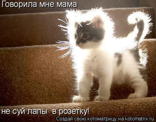 Котоматрица: Говорила мне мама  не суй лапы  в розетку!