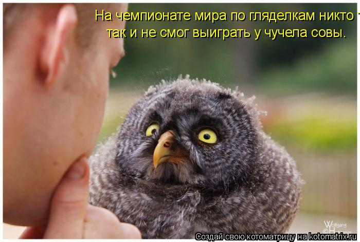 Котоматрица: На чемпионате мира по гляделкам никто так и не смог выиграть у чучела совы так и не смог выиграть у чучела совы.