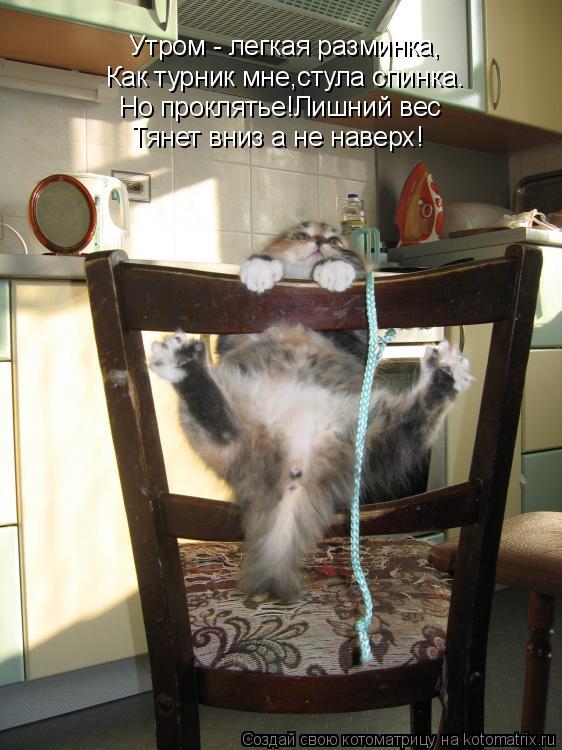 Котоматрица: Утром - легкая разминка, Как турник мне,стула спинка. Но проклятье!Лишний вес Тянет вниз а не наверх!