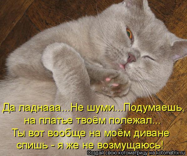 Основные обязанности кота по дому.