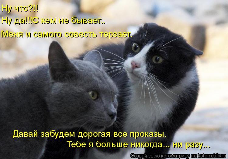 Котоматрица: Меня и самого совесть терзает. Давай забудем дорогая все проказы. Тебе я больше никогда... ни разу...  Ну что?!! Ну да!!!С кем не бывает..