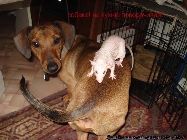 Котоматрица: собака! на кухню поворачивай!