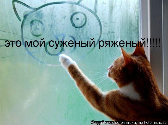 Котоматрица: это мой суженый ряженый!!!!!