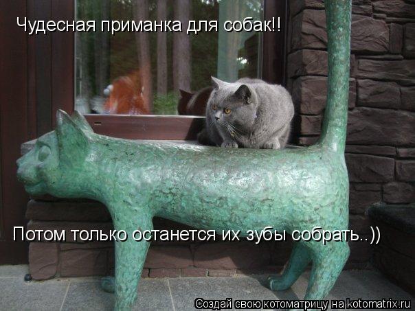 Котоматрица: Чудесная приманка для собак!!  Потом только останется их зубы собрать..))