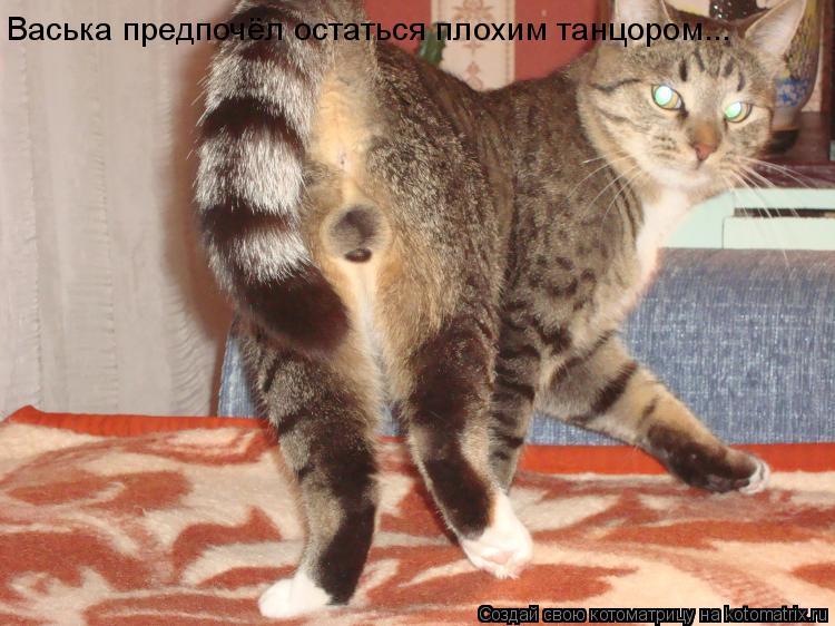 Котоматрица: Васька предпочёл остаться плохим танцором...