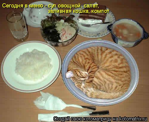 Котоматрица: Сегодня в меню - суп овощной, салат, заливная кошка, компот