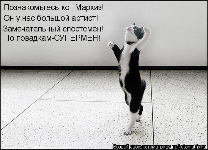 Котоматрица: Познакомьтесь-кот Маркиз! Он у нас большой артист! Замечательный спортсмен! По повадкам-СУПЕРМЕН!