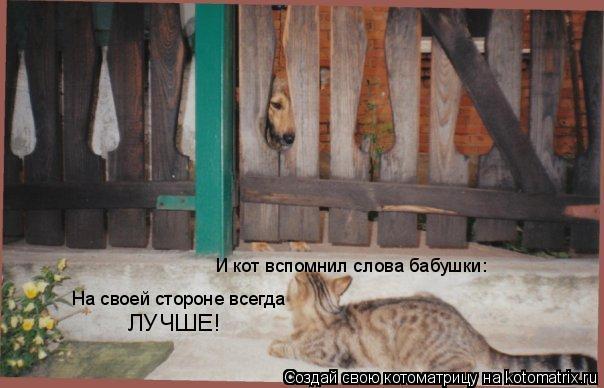 Котоматрица: И кот вспомнил слова бабушки: На своей стороне всегда ЛУЧШЕ!
