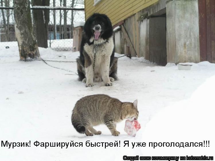 Котоматрица: Мурзик! Фаршируйся быстрей! Я уже проголодался!!!