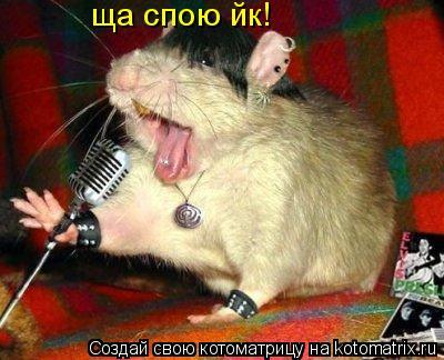 Котоматрица: ща спою йк!
