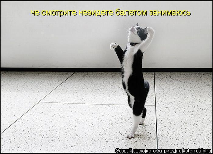 Котоматрица: че смотрите невидете балетом занимаюсь