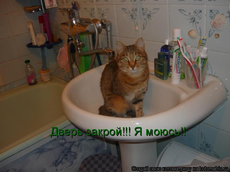 Котоматрица: Дверь закрой!!! Я моюсь!!