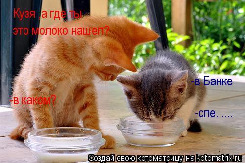 Котоматрица: Кузя ,а где ты  это молоко нашел? -в Банке -в каком? -спе......