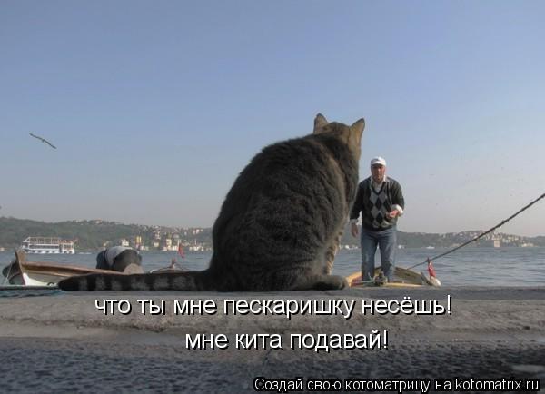 Котоматрица: что ты мне пескаришку несёшь!  мне кита подавай!