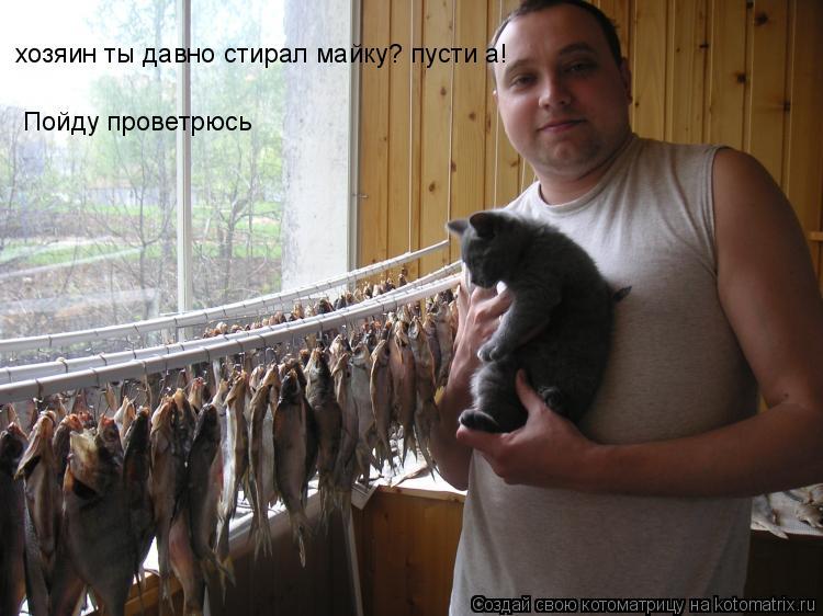 Котоматрица: хозяин ты давно стирал майку? пусти а! Пойду проветрюсь