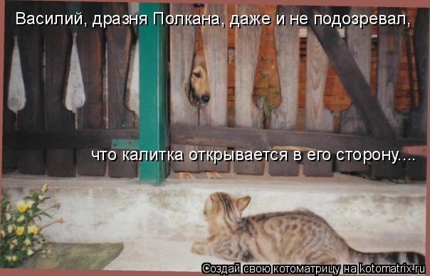Котоматрица: Василий, дразня Полкана, даже и не подозревал, что калитка открывается в его сторону....
