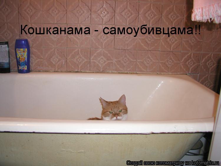 Котоматрица: Кошканама - самоубивцама!!