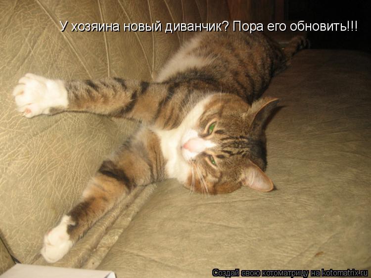 Котоматрица: У хозяина новый диванчик? Пора его обновить!!!