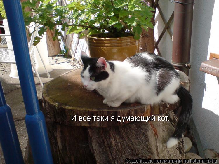 Котоматрица: И все таки я думающий кот.
