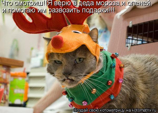 Котоматрица: Что смотриш!!Я верю в деда мороза,и оленей, и помогаю им развозить подарки!!!