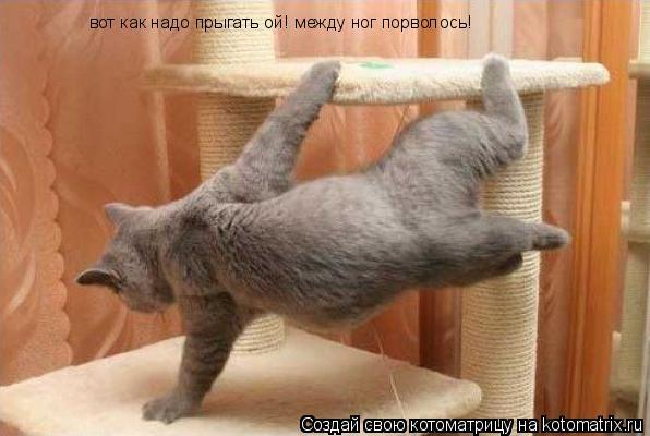 Котоматрица: вот как надо прыгать ой! между ног порволось!