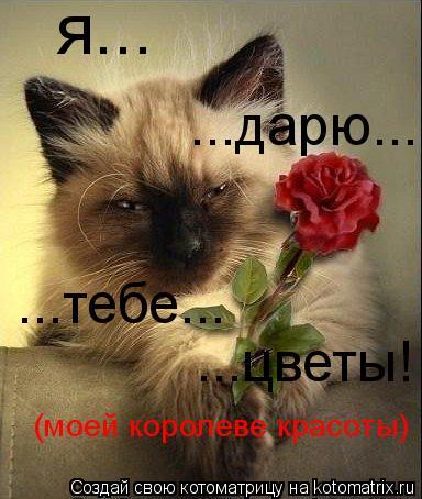 Котоматрица: я... ...дарю... ...тебе... ...цветы! (моей королеве красоты)