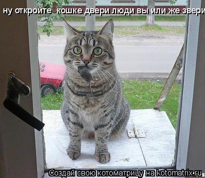 Котоматрица: ну откройте  кошке двери люди вы или же звери?