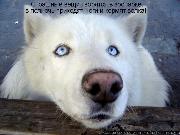 Котоматрица: Страшные вещи творятся в зоопарке: в полночь приходят ноги и кормят волка!