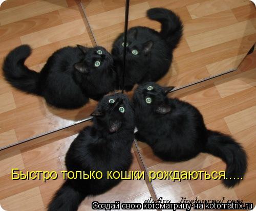 Котоматрица: Быстро только кошки рождаються.....