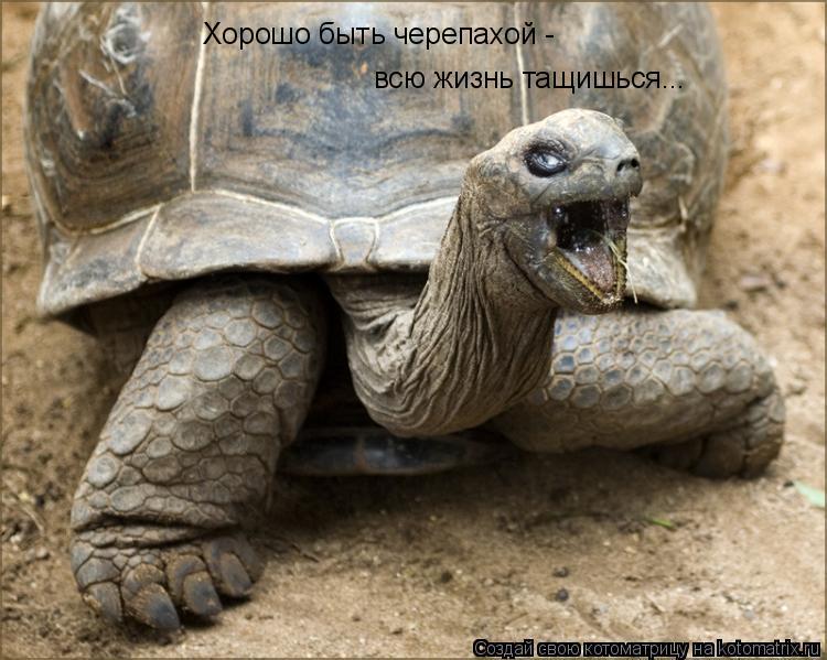Котоматрица: Хорошо быть черепахой -  всю жизнь тащишься...