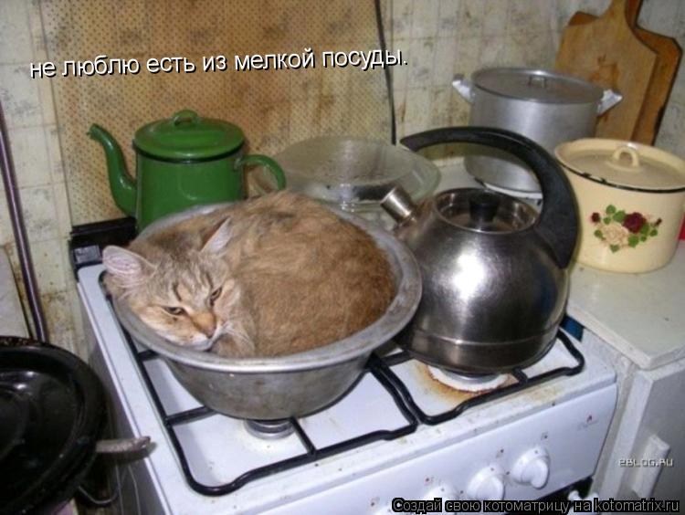 Котоматрица: не люблю есть из мелкой посуды.