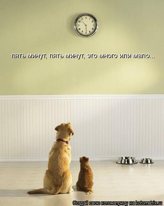 Котоматрица: пять минут, пять минут, это много или мало...