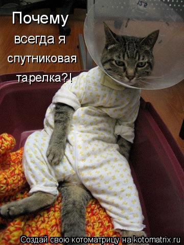 Котоматрица: Почему всегда я спутниковая тарелка?!