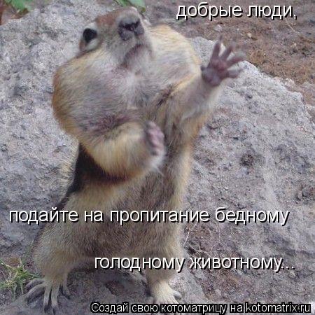 Котоматрица: добрые люди, подайте на пропитание бедному  голодному животному...