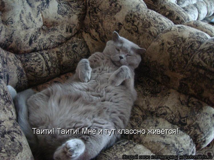 Котоматрица: Таити! Таити! Мне и тут классно живётся!