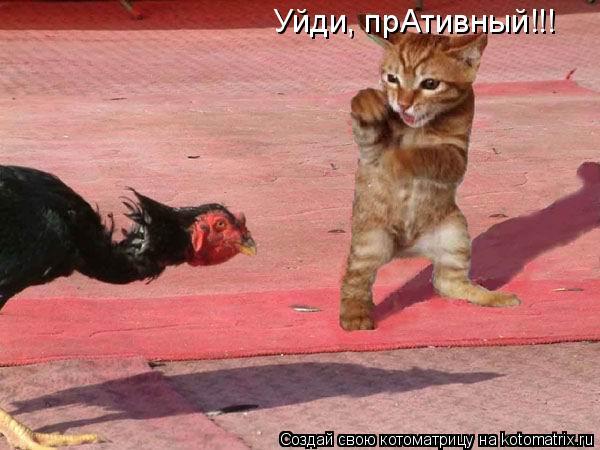 Котоматрица: Уйди, прАтивный!!!