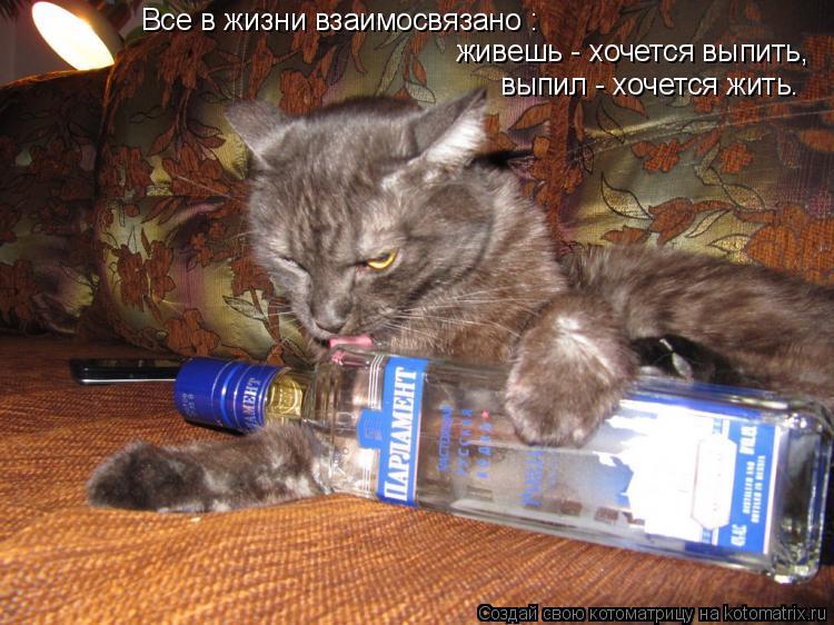 Котоматрица: Все в жизни взаимосвязано : живешь - хочется выпить, выпил - хочется жить.