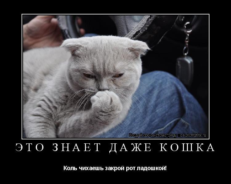 Котоматрица: Это знает даже кошка Коль чихаешь закрой рот ладошкой!