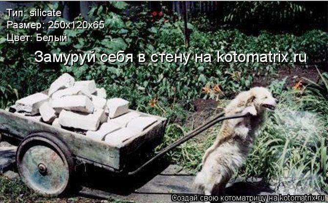 Котоматрица: Тип: silicate Размер: 250х120х65 Цвет: Белый Замуруй себя в стену на kotomatrix.ru